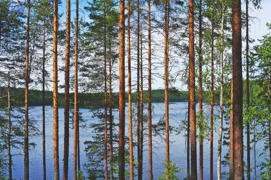 lake-892828_1280